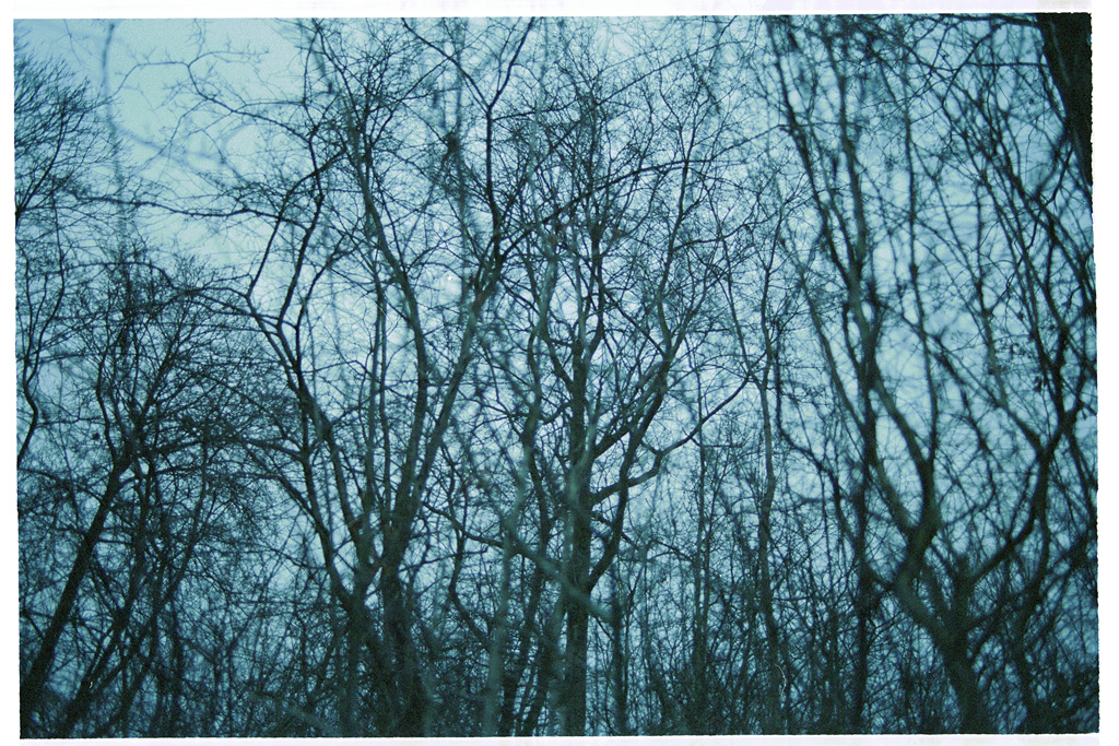 Untitled (branches)