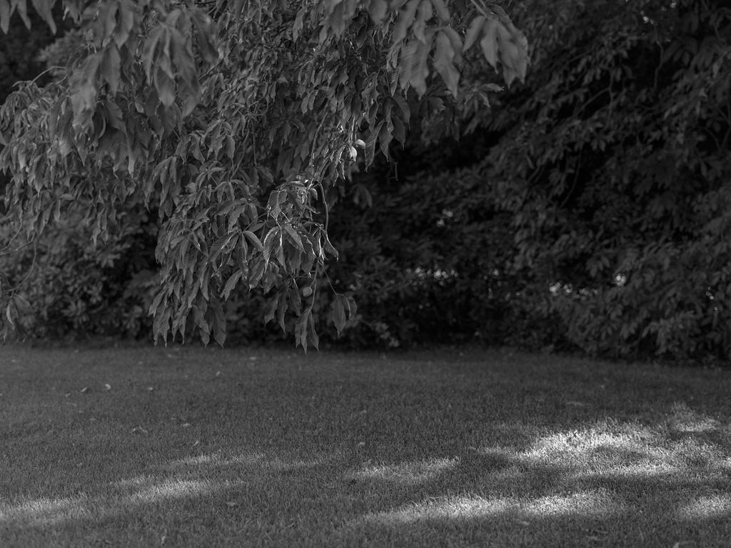 Secret garden 3 / 6