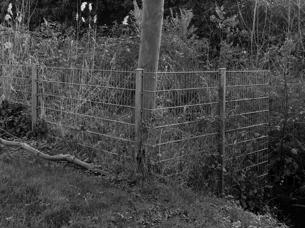 Secret garden 6 / 6